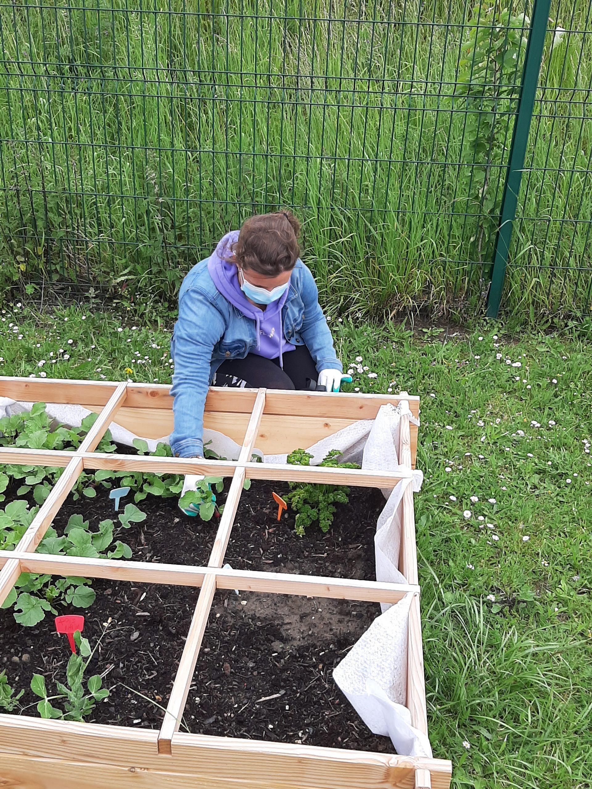 La récolte du club jardinage